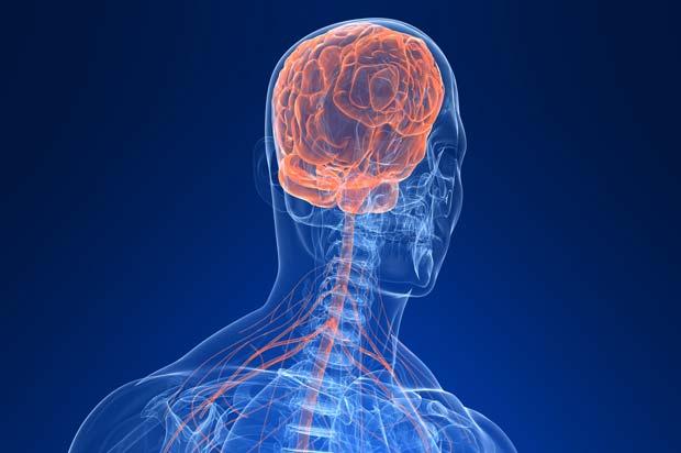 Sistema Nervoso Central é tema de palestra em Santo André